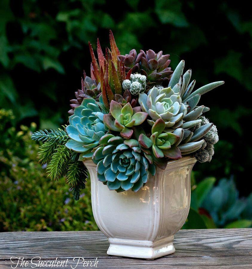Succulent arrangement gardens plants and flowers for Garden arrangement of plants