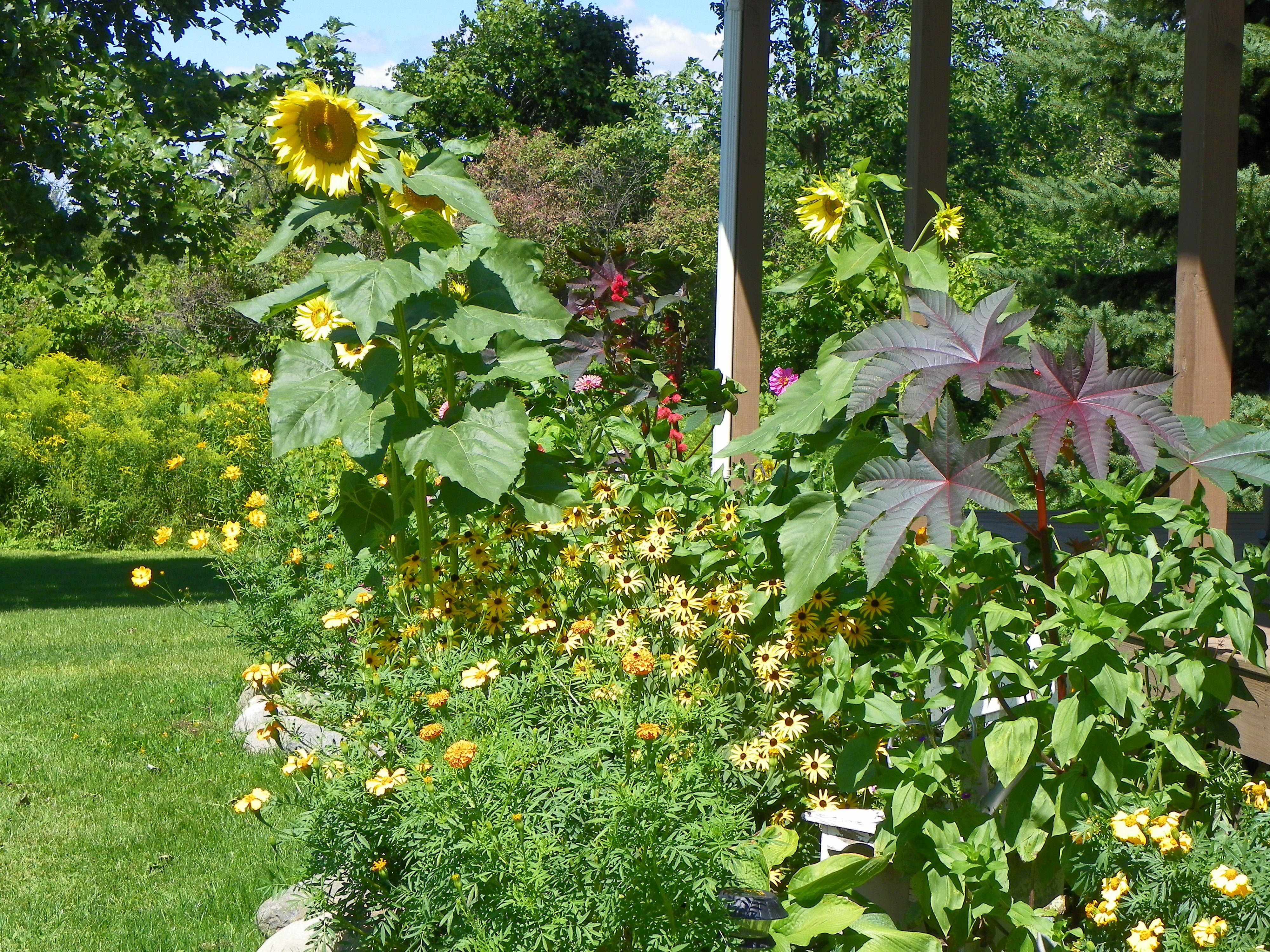 Front Yard Flowers Flower Gardens Pinterest
