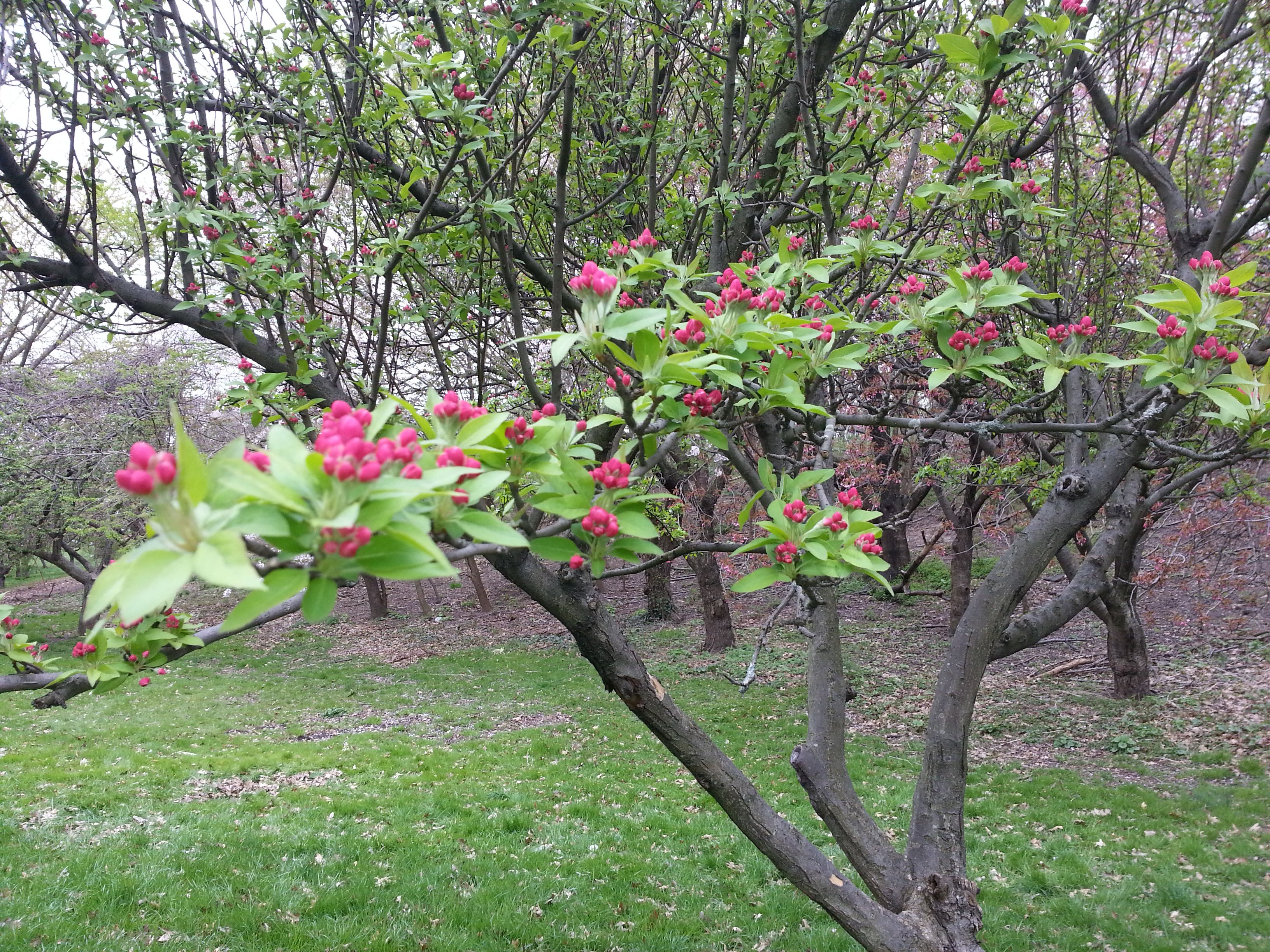Springtime At Queens Botanical Garden Favorite Places