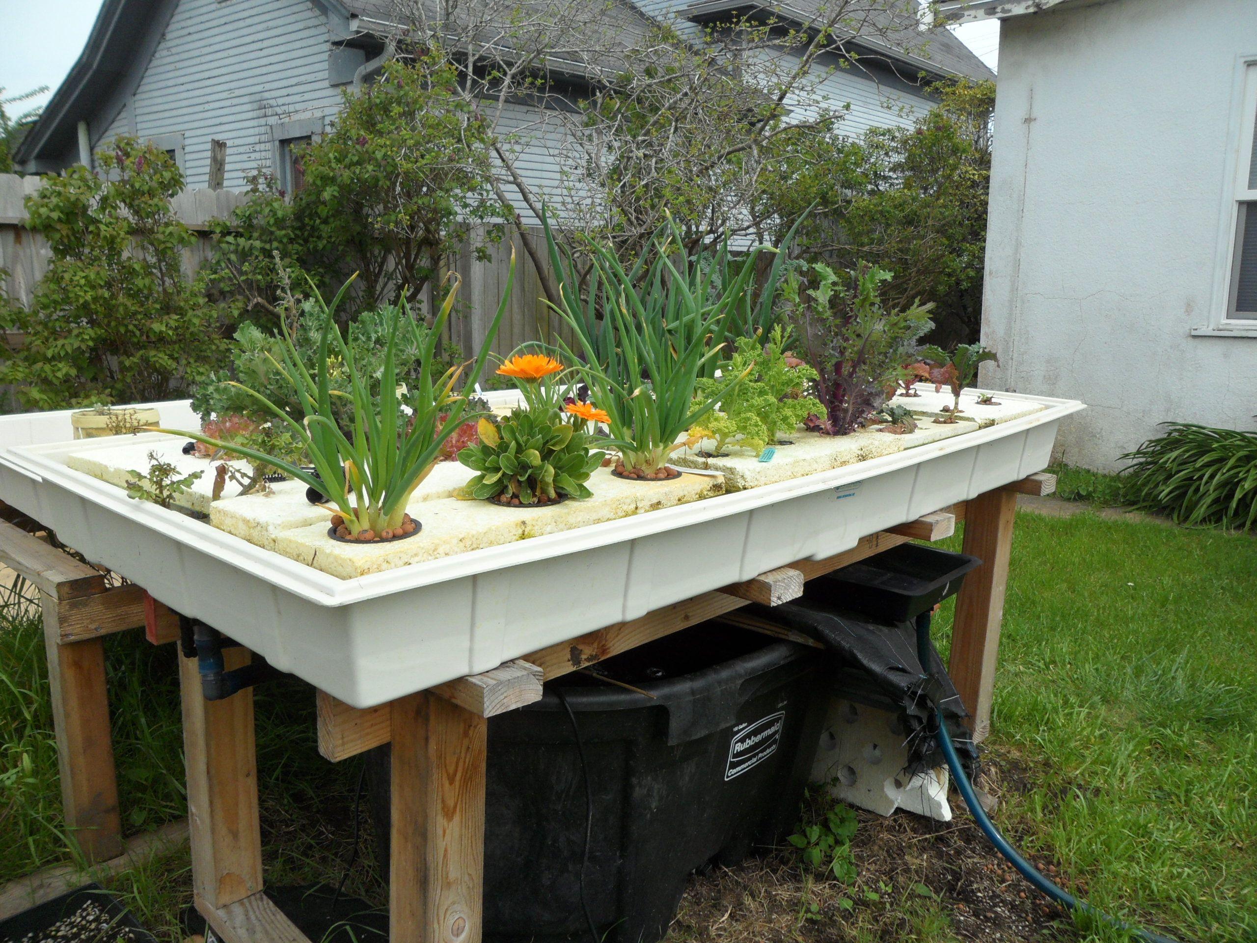 Aquaponics easy for Fish aquaponics garden