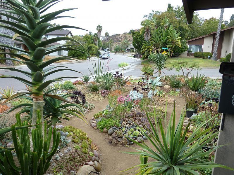 cactus Landscape Pinterest