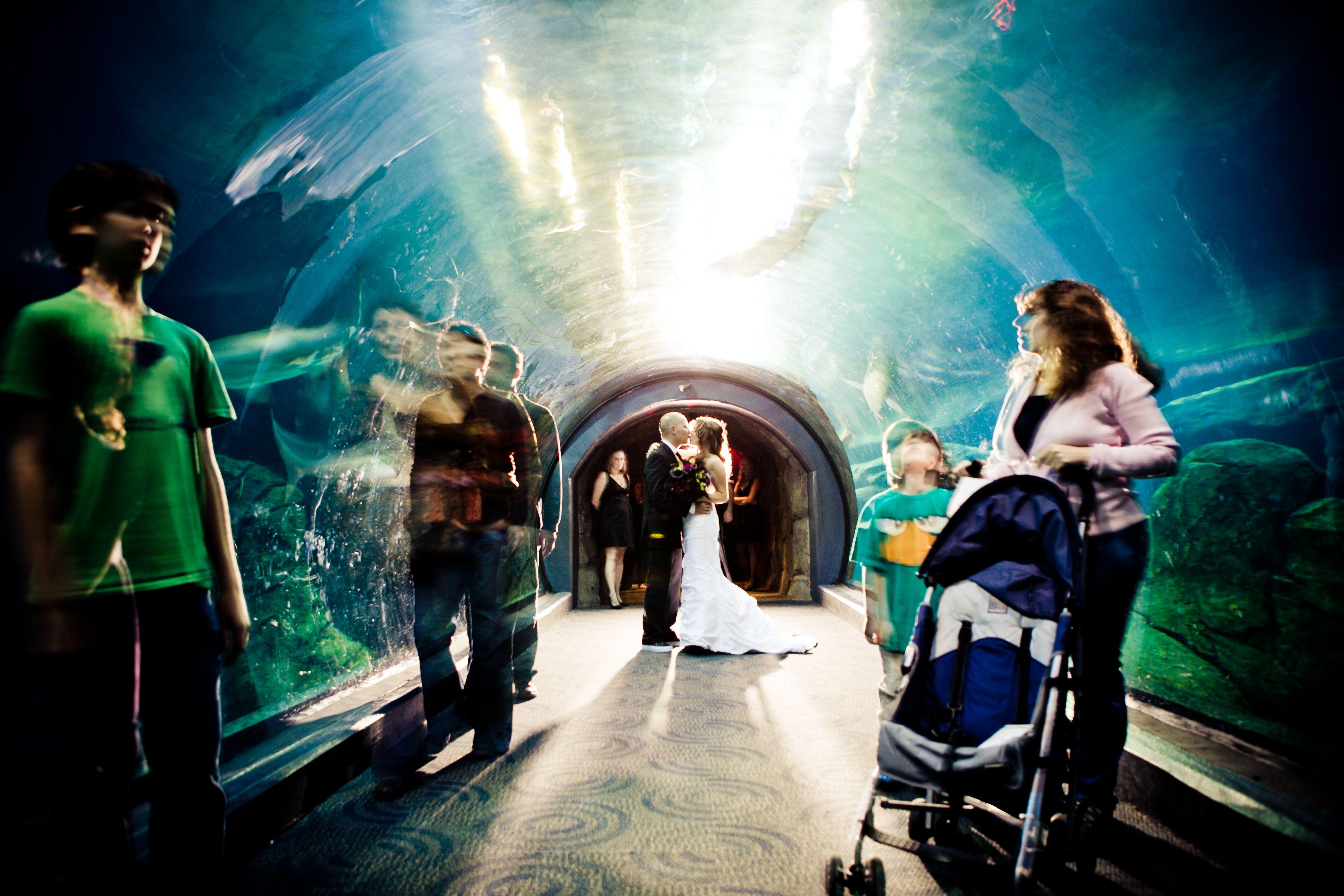 Camden Aquarium Parties Party Invitations Ideas
