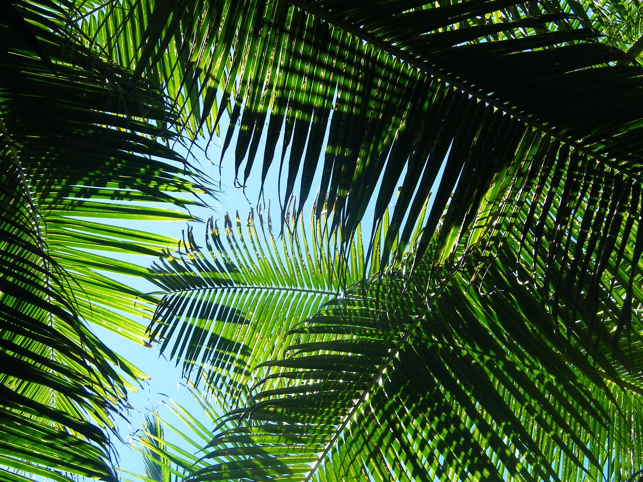 green palm leaves summer - photo #4