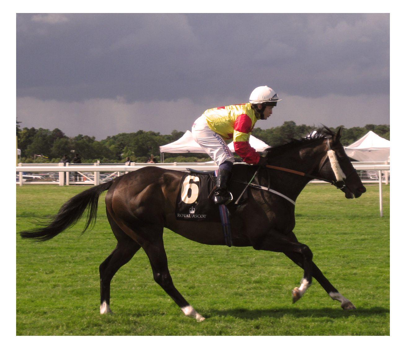 ascot horse