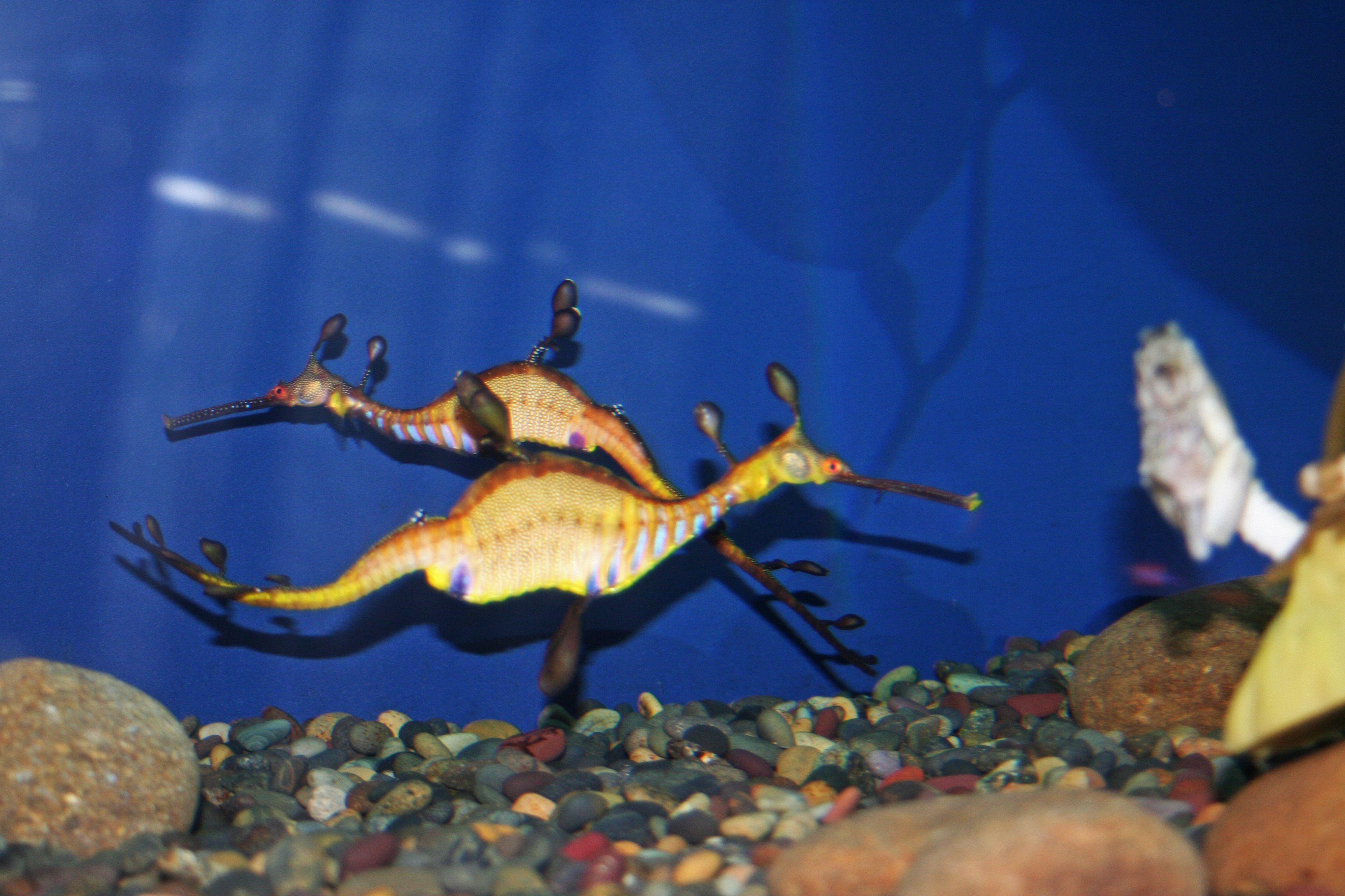 Tennessee aquarium gatlinburg coupons