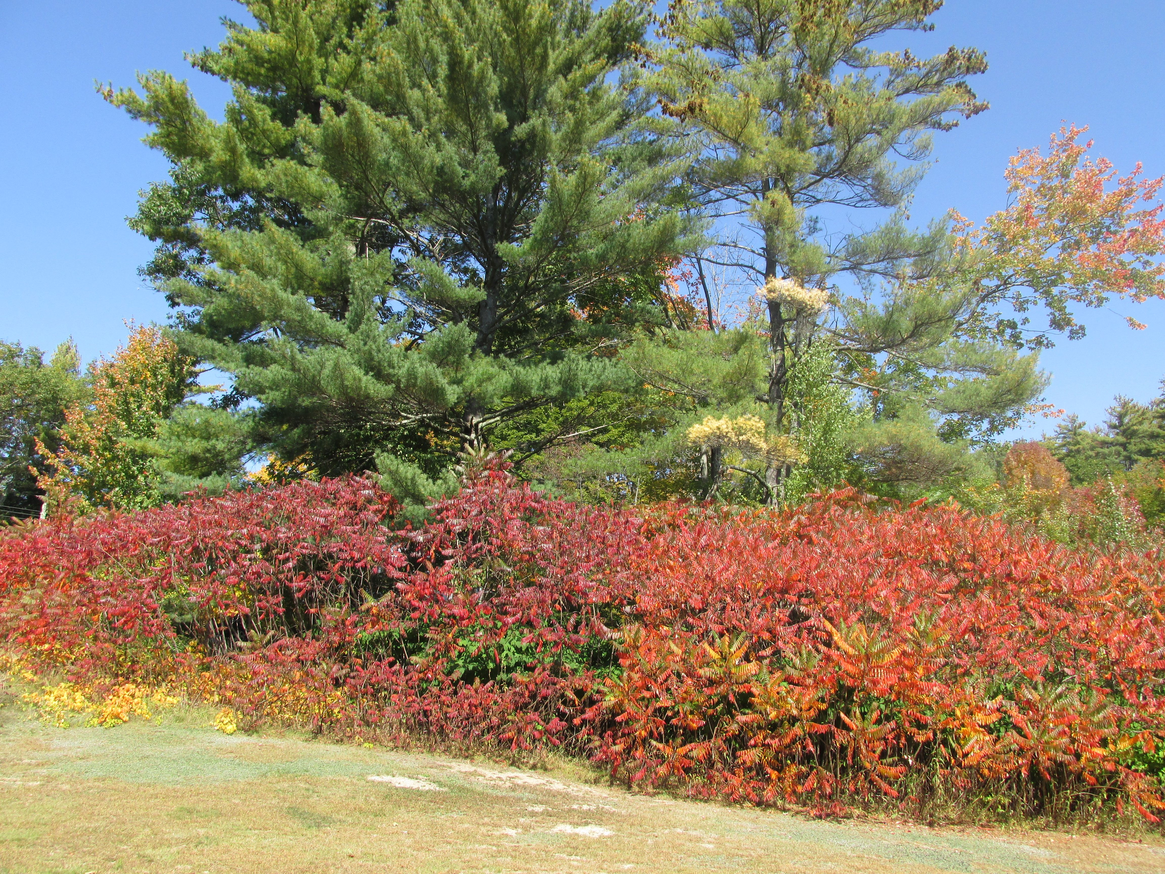 Foliage colors at Cranmore Mountain Lodge