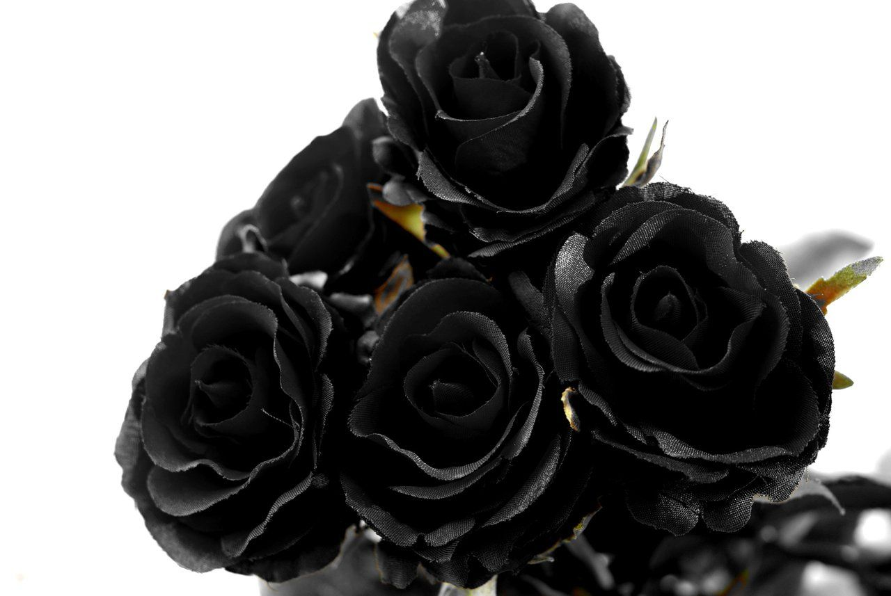 black rose mourning flower talk pinterest