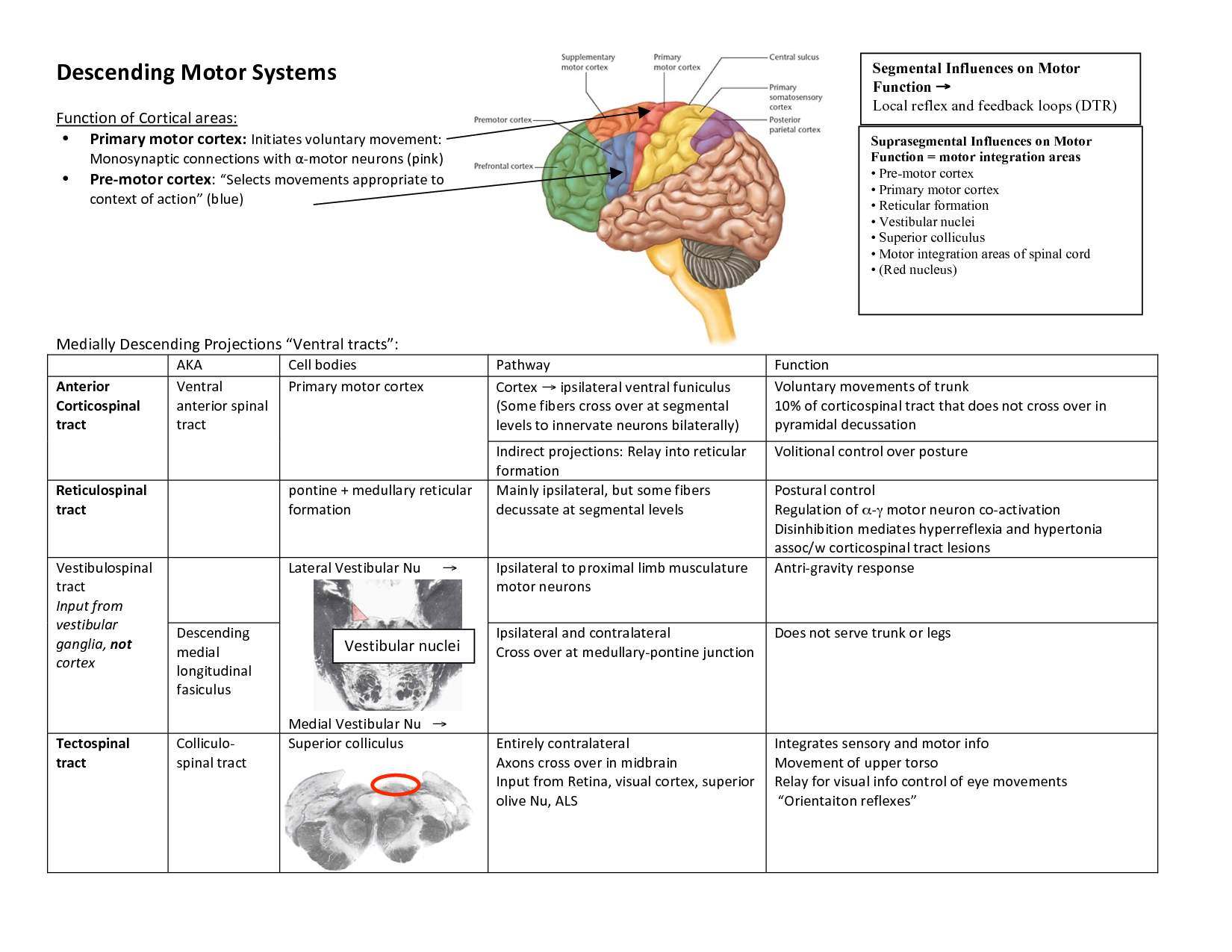 Upper Motor Neuron Vs Lower Motor Neuron Kakamozza