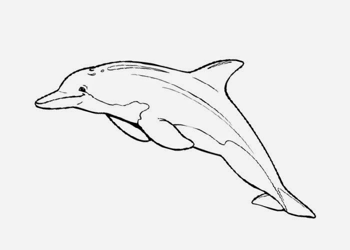 Bottlenose Dolphin Coloring Pages Free Coloring Pages