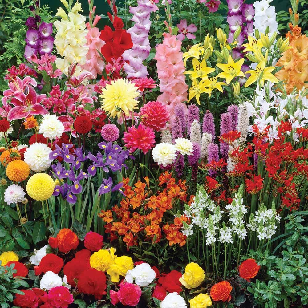 Высокие кустовые цветы для сада