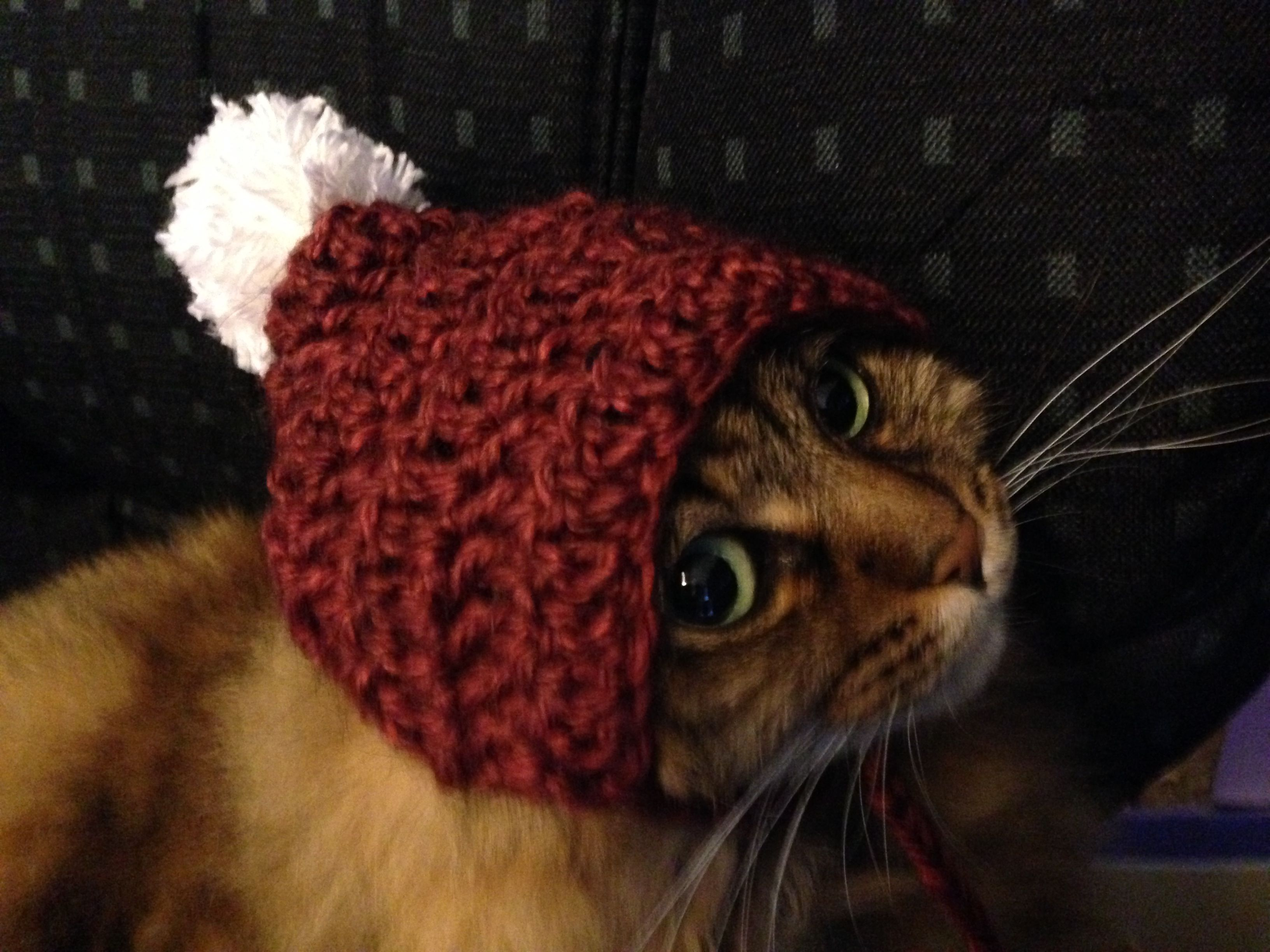 Crochet Cat Hat : Crochet cat hat Yarn Crafts Pinterest