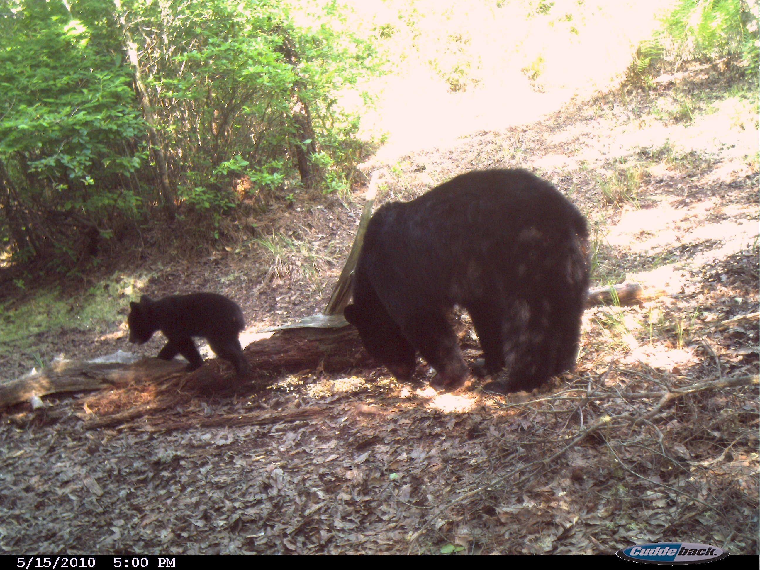 Wild Backyard Animals : Yards