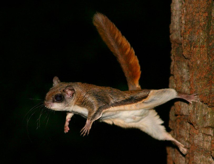 sites explore mammals little flying