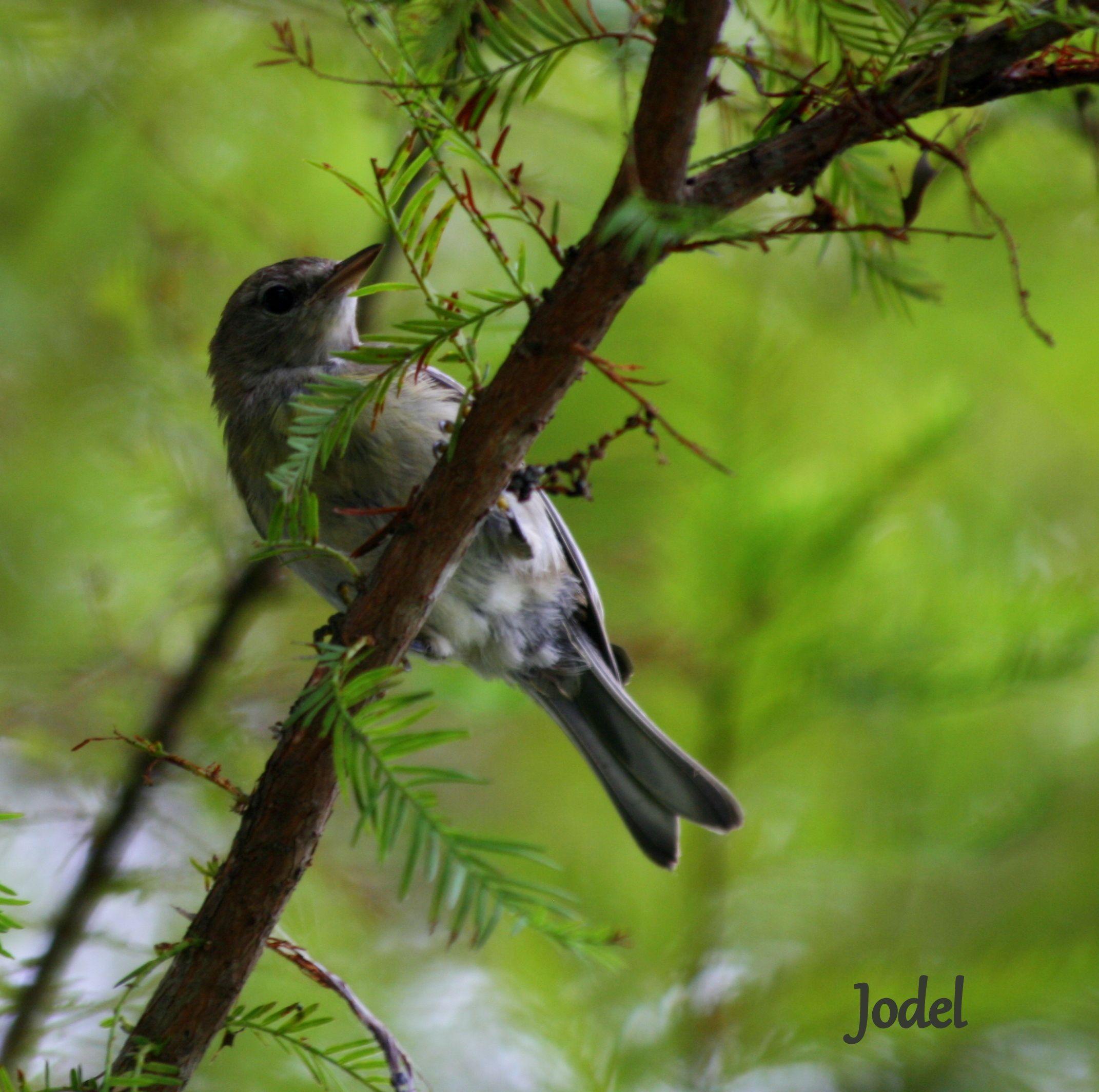 Birds of Louisiana | Louisiana Wild Life | Pinterest