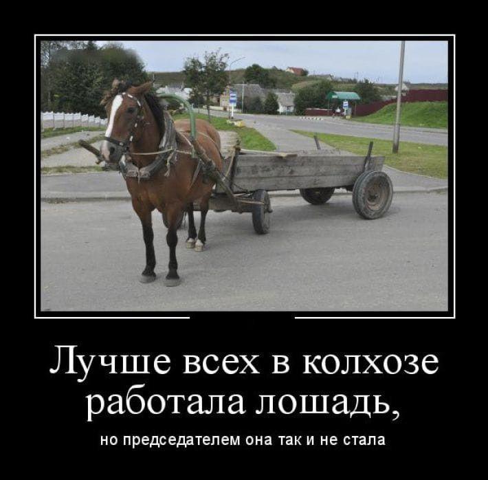 Анекдот Про Ростову И Лошадь Видео