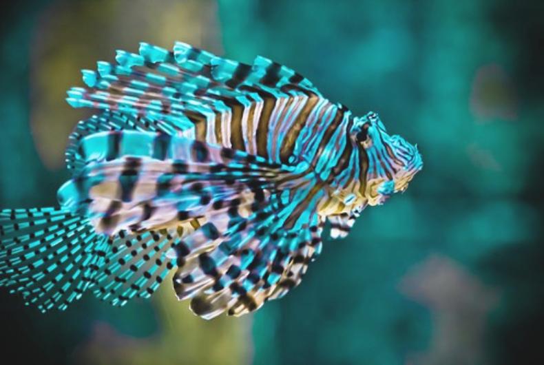 Tropical Fish Beautiful Sea Creatures Pinterest