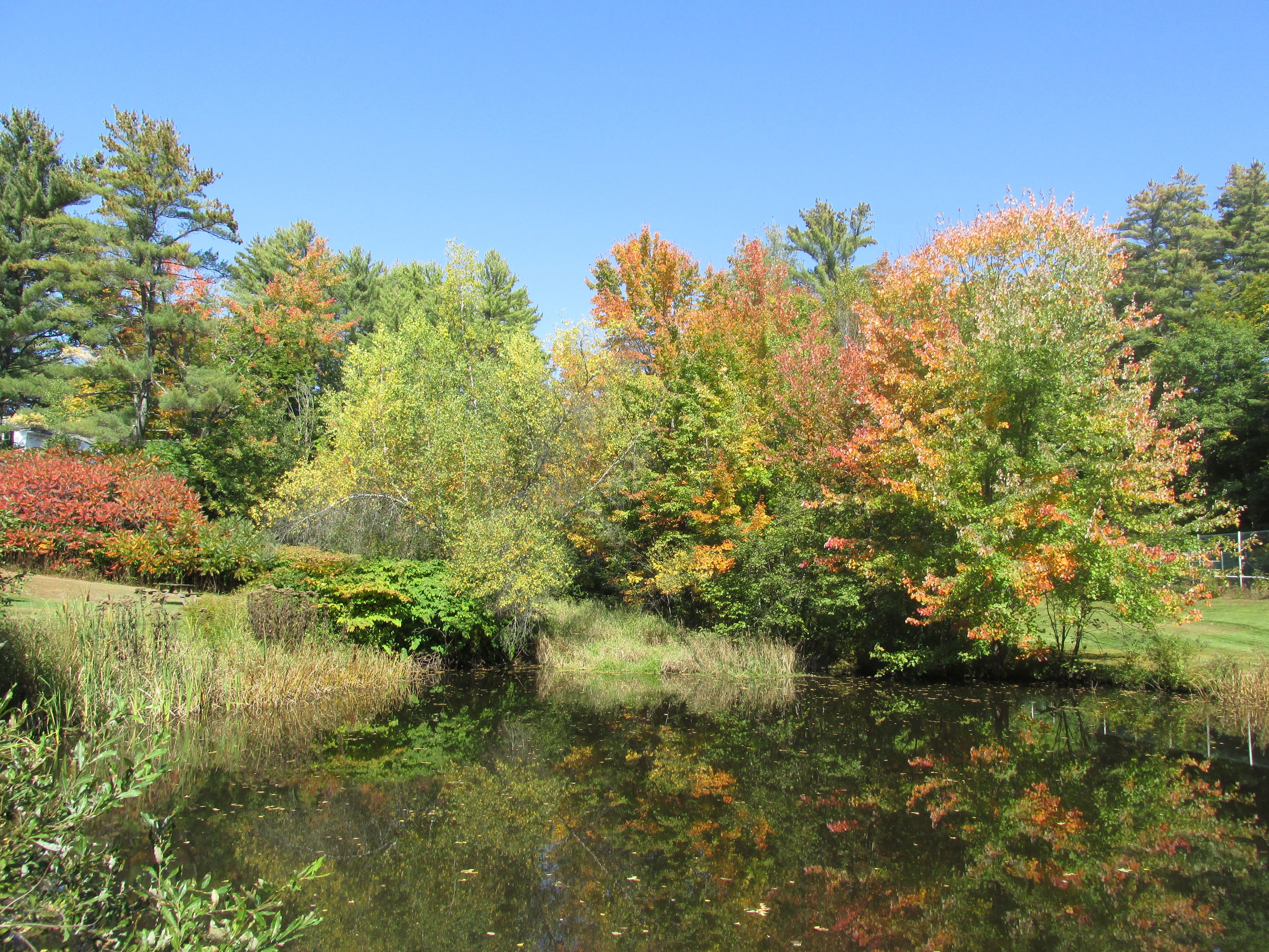 Foliage over the pond at Cranmore Mountain Lodge