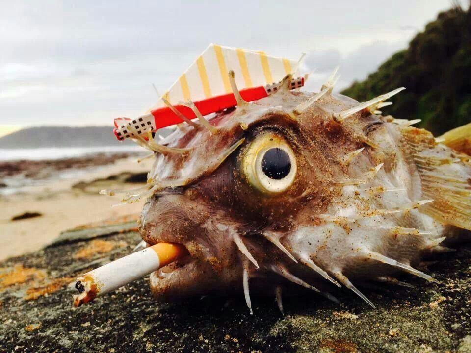 animals smoking duzzas funny stuff pinterest
