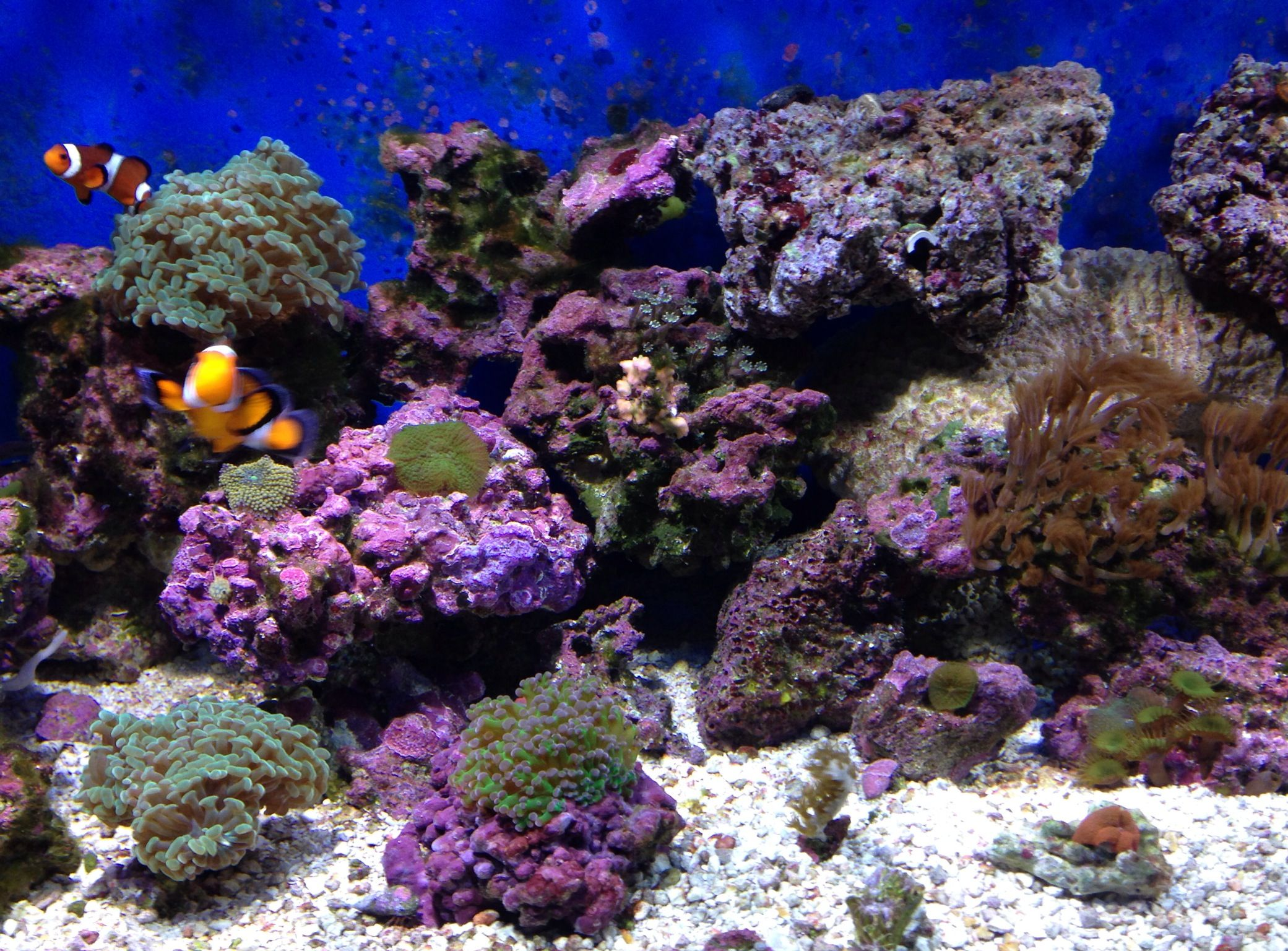 75 gallon aquarium reef coral reef fish aquarium 75 for Reef tank fish