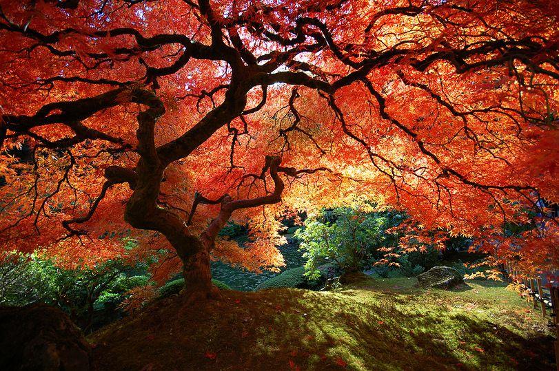 Japanese Garden Portland Oregon Nature Photography