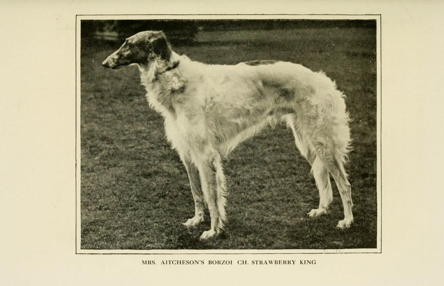 Borzoi | EXTINCT DOG BREEDS-Old Photos | Pinterest