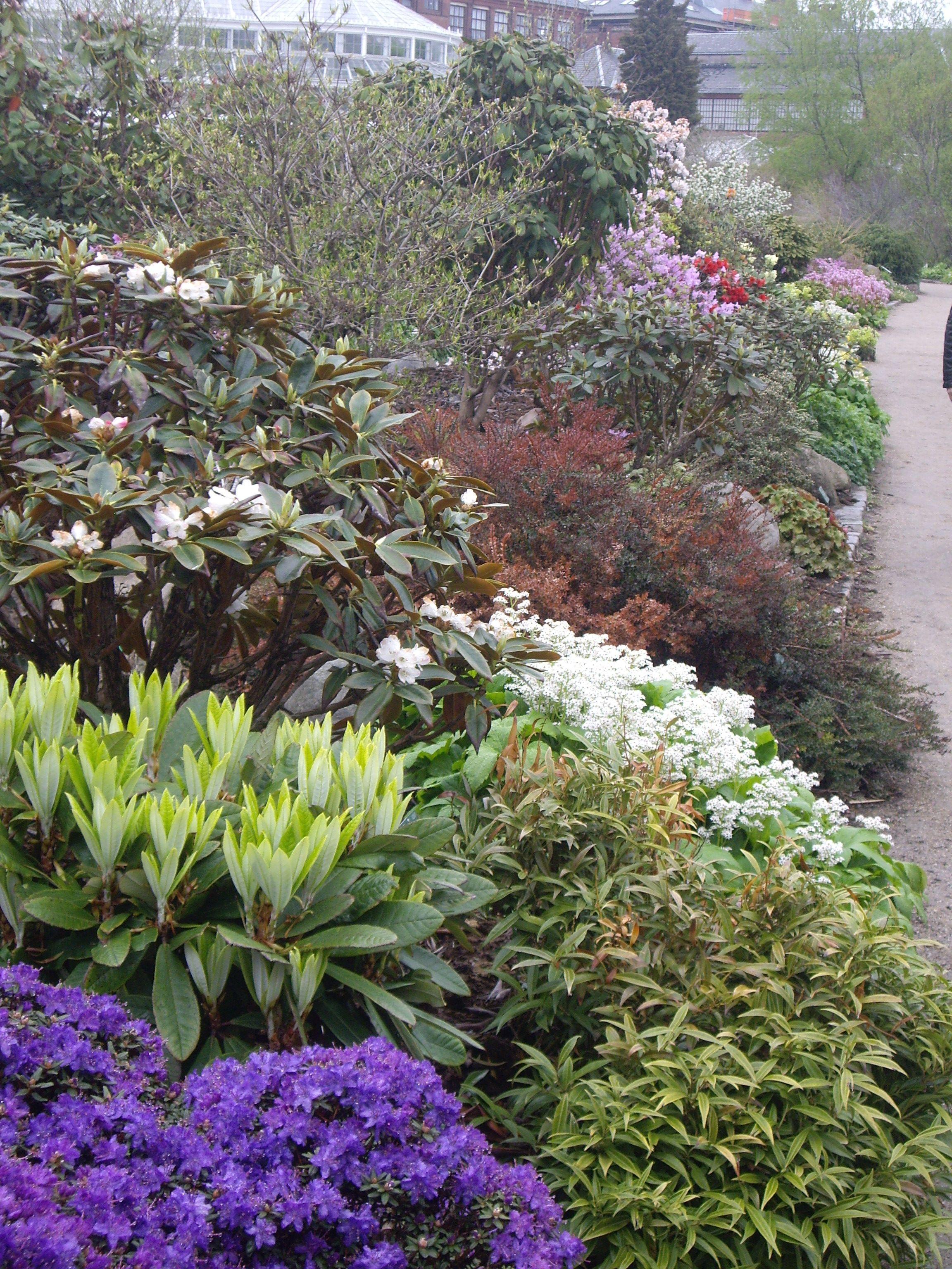 Jardin botanique copenhague pinterest for Jardin botanique 78