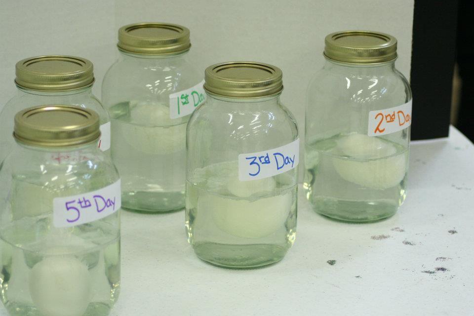 Middle School Science Fair projects   Professional Development/Teachi ...