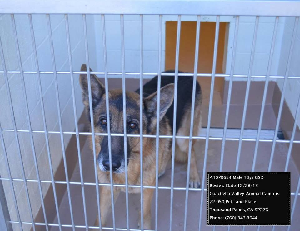 Pin by tanja schriefer on death row pets and rescue needs please he