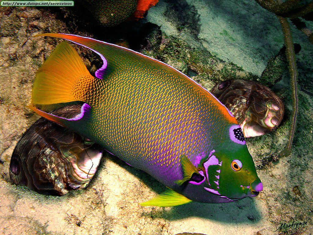 Un pez hermosos paisajes fl res jardines peces y - Jardines y paisajes ...