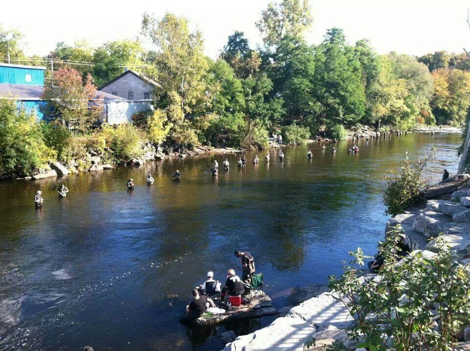Salmon river pulaski ny oct 2013 salmon river romance for Salmon fishing ny
