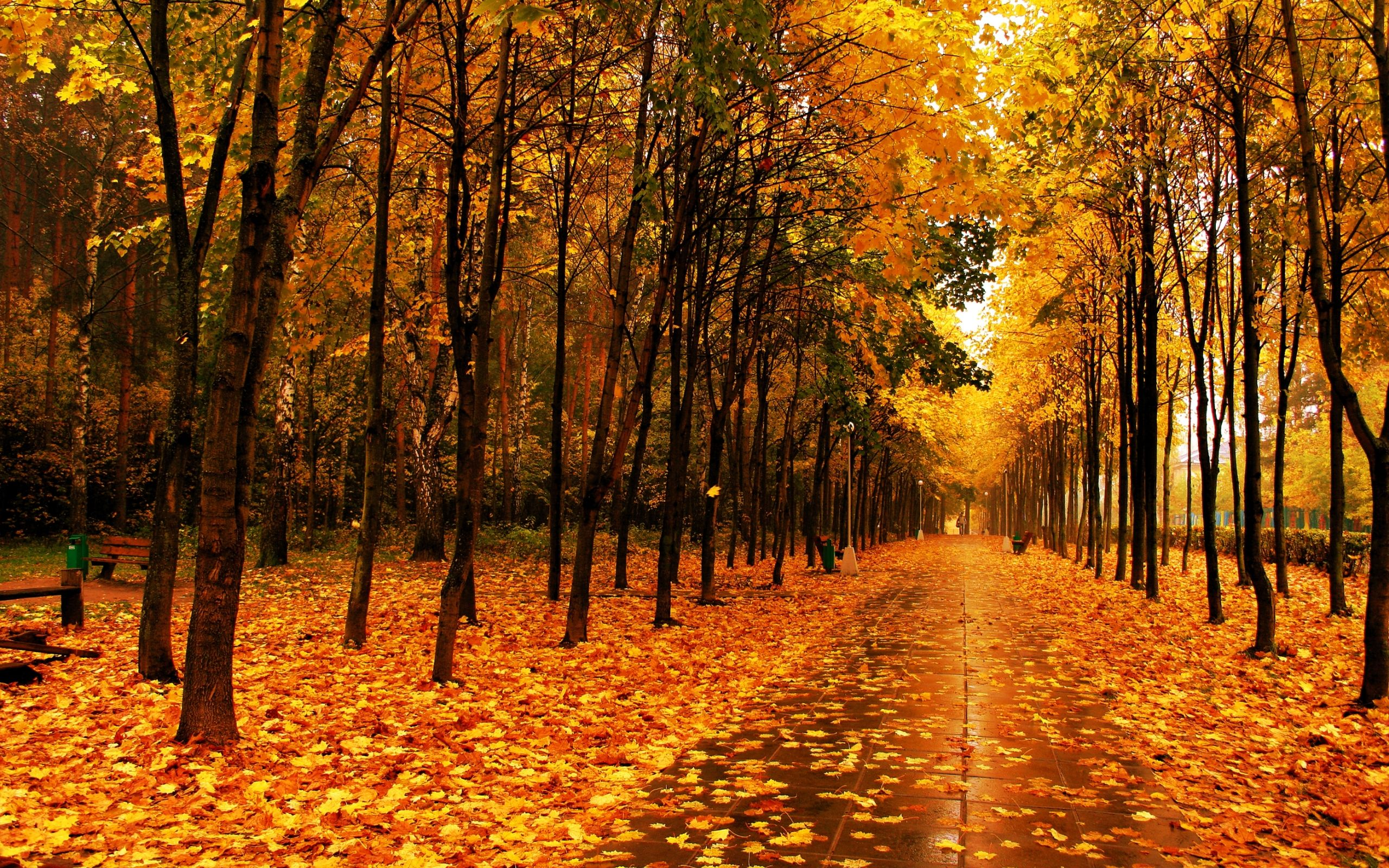amazing autumn landscape autumn pinterest