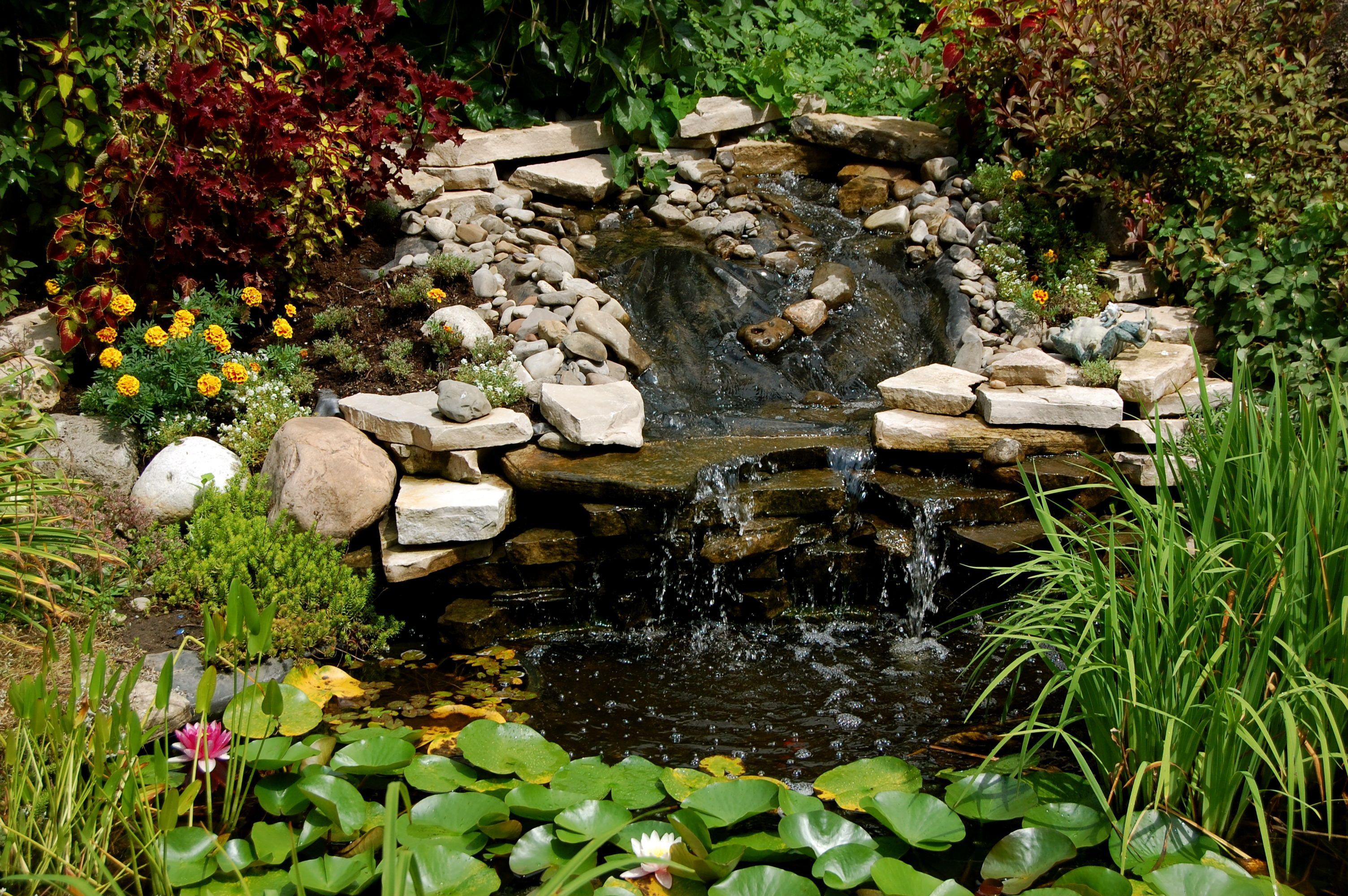 Fish pond w lily pads fish stuff pinterest for Fish pond stuff
