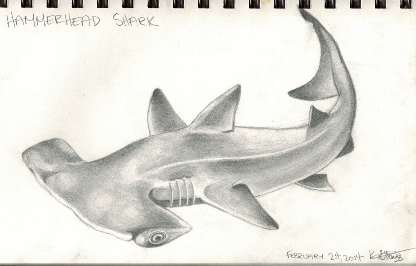 Uncategorized Hammerhead Shark Drawing hammerhead shark drawing photo gallery of drawing