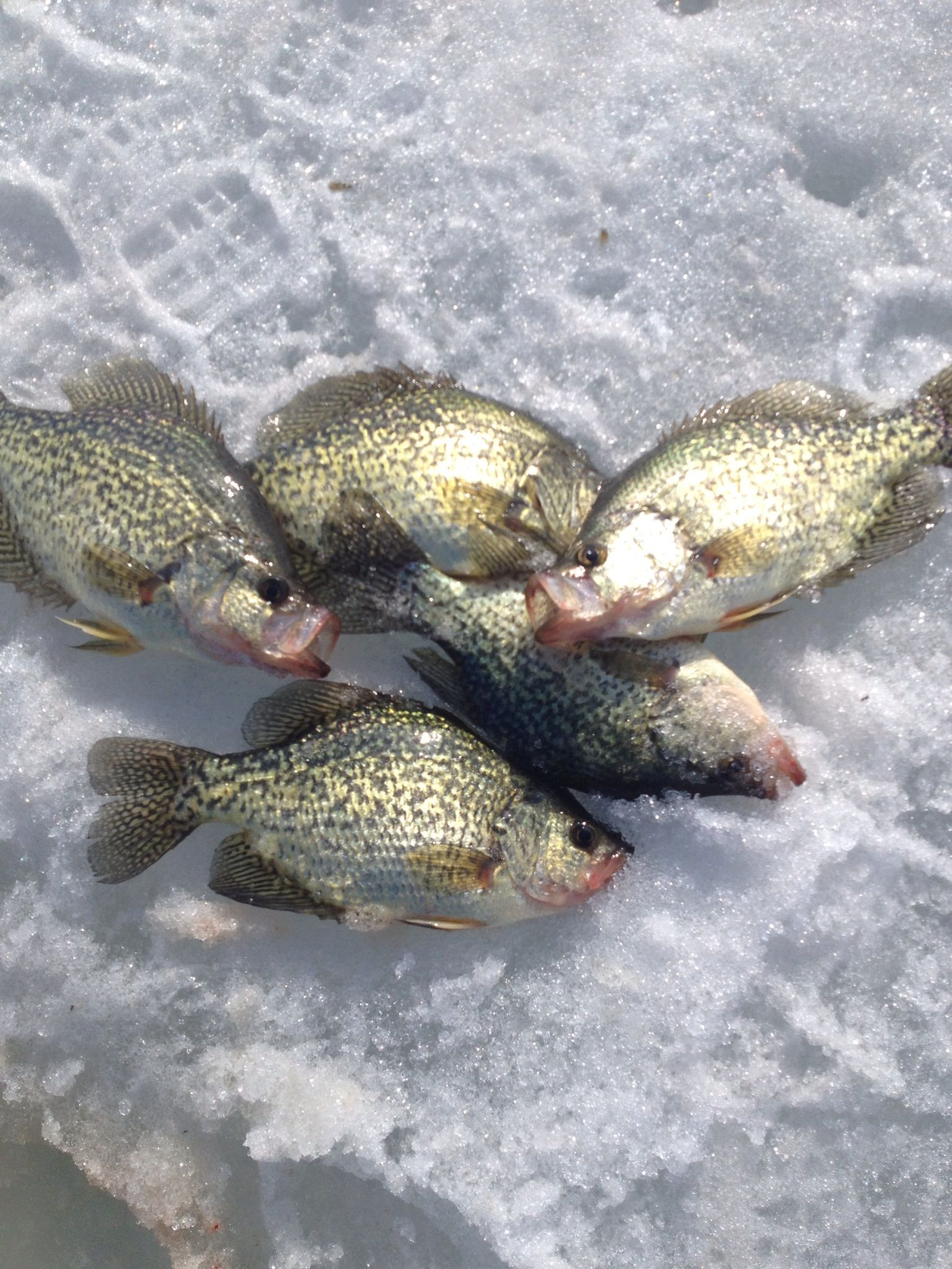 404 page not found for Leech lake ice fishing