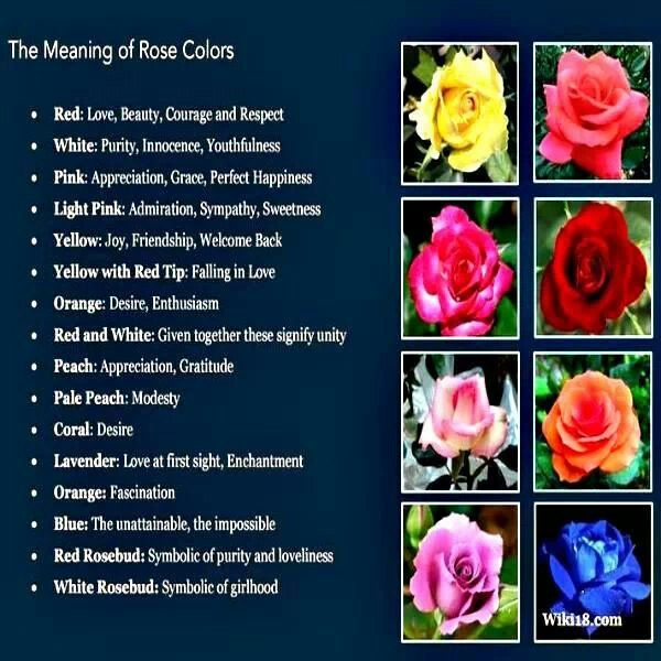 Flower therapy meaning of rose colors spiritual pinterest for Meaning of flower colors