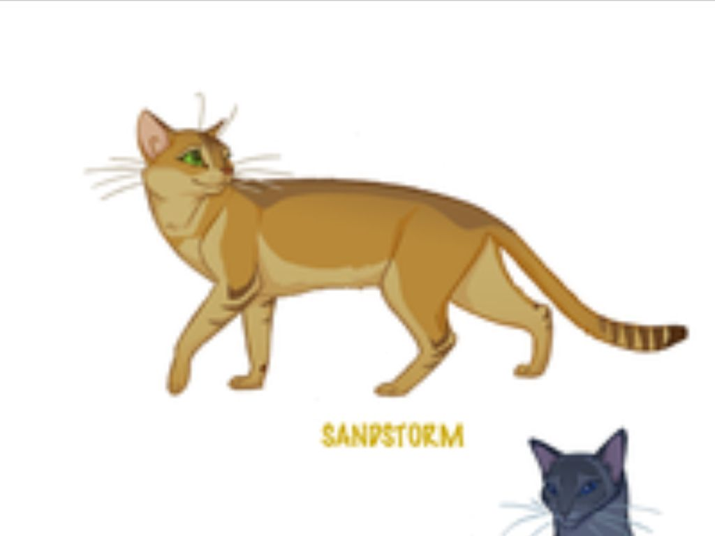 Warrior Cats Sparrowflight
