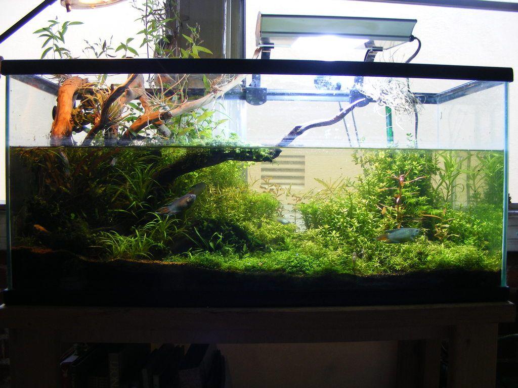 Aquascape Aquascaping Ideas & Inspiration Pinterest