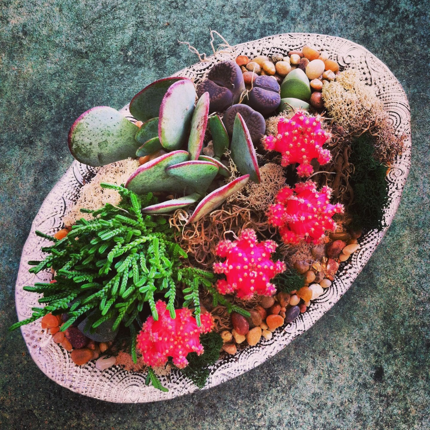 Moon cacti and succulents dish garden Cacti and