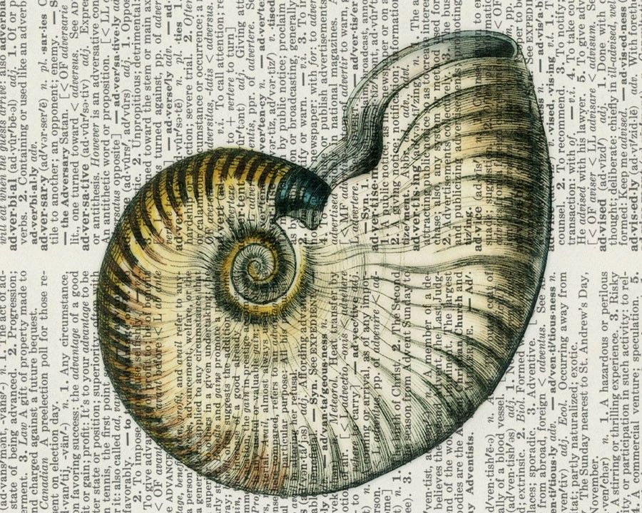 Shell Drawing | Natural Forms | Pinterest