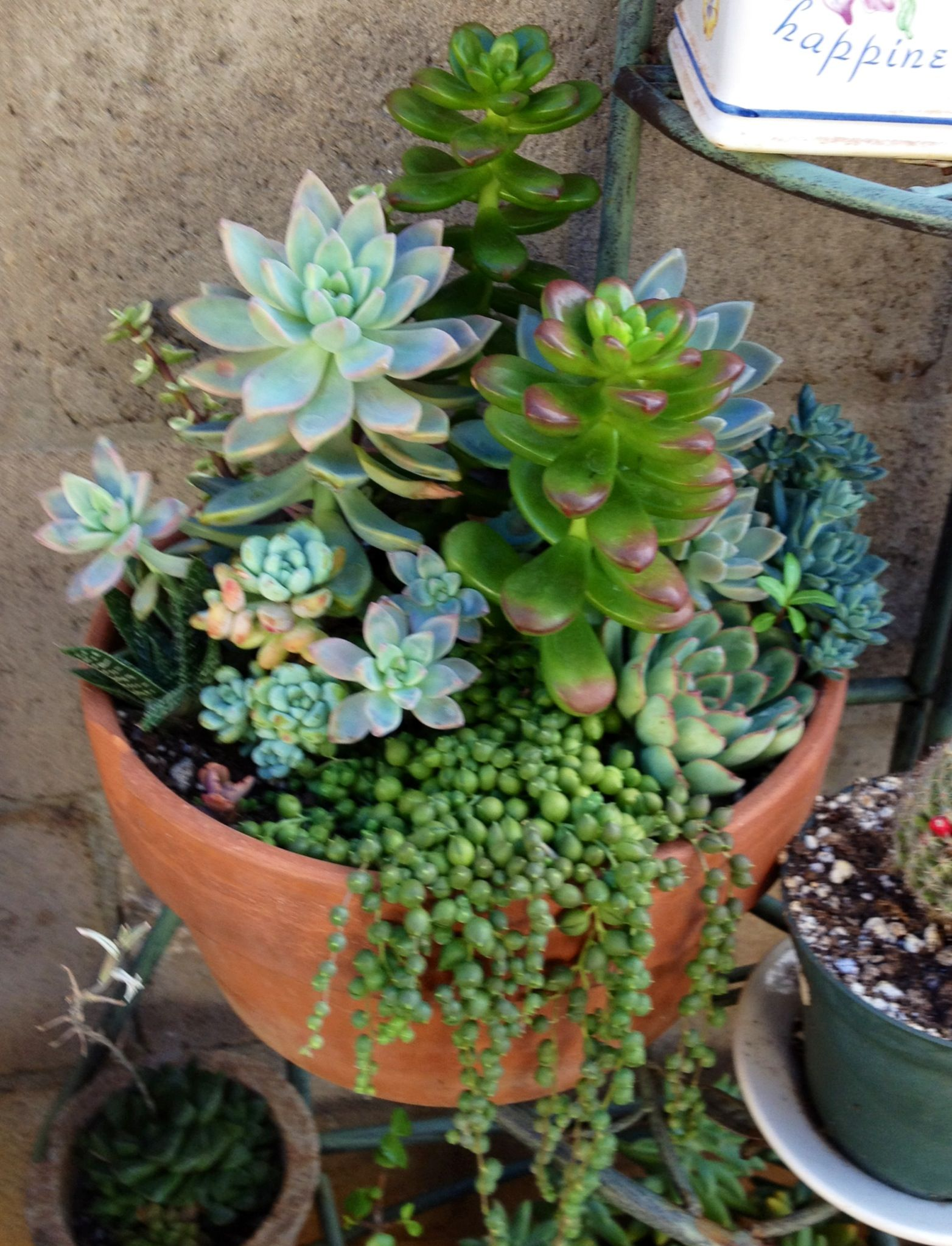 Succulent container garden succulents flowers trees pinterest - How to make a succulent container garden ...