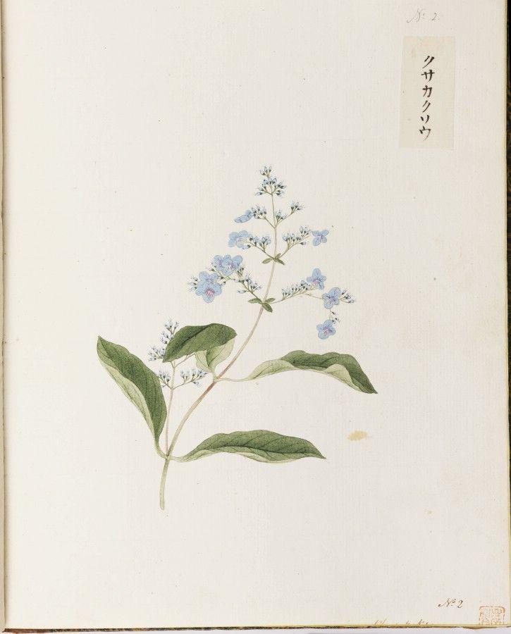 川原慶賀の画像 p1_20