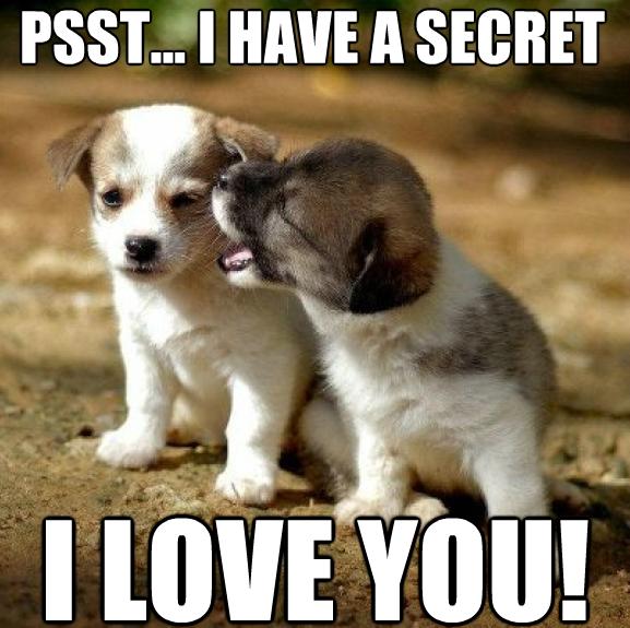 cute animals saying i love you wwwpixsharkcom images