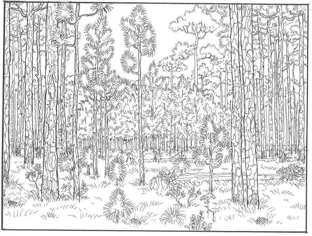 forest of trees coloring pages - photo#4