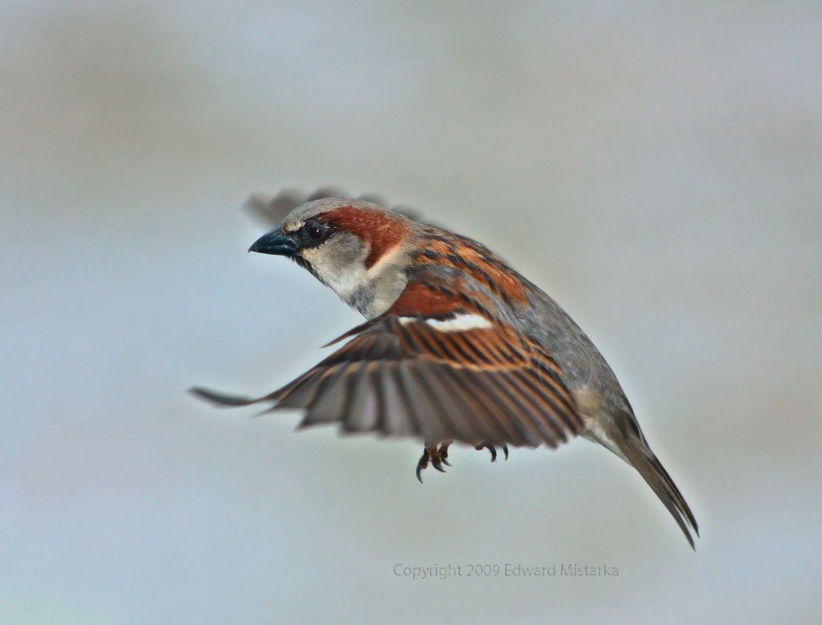 Flying Sparrow  Home  Facebook