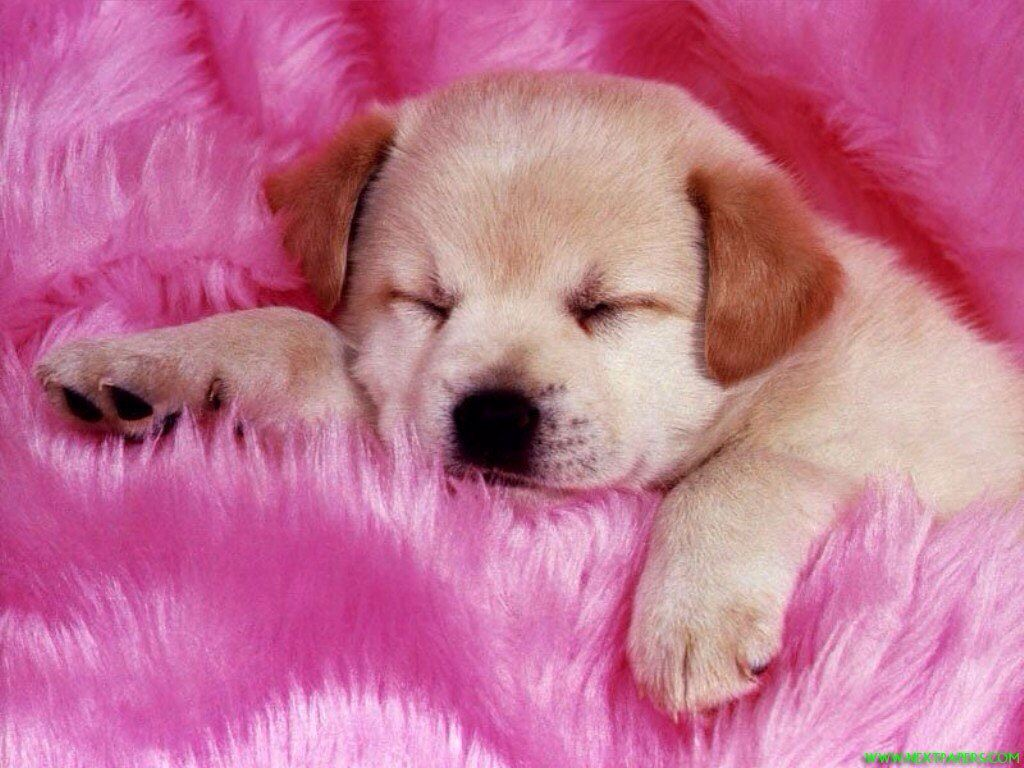 Puppy in pink cute dogs pinterest for Pictures of cute dogs