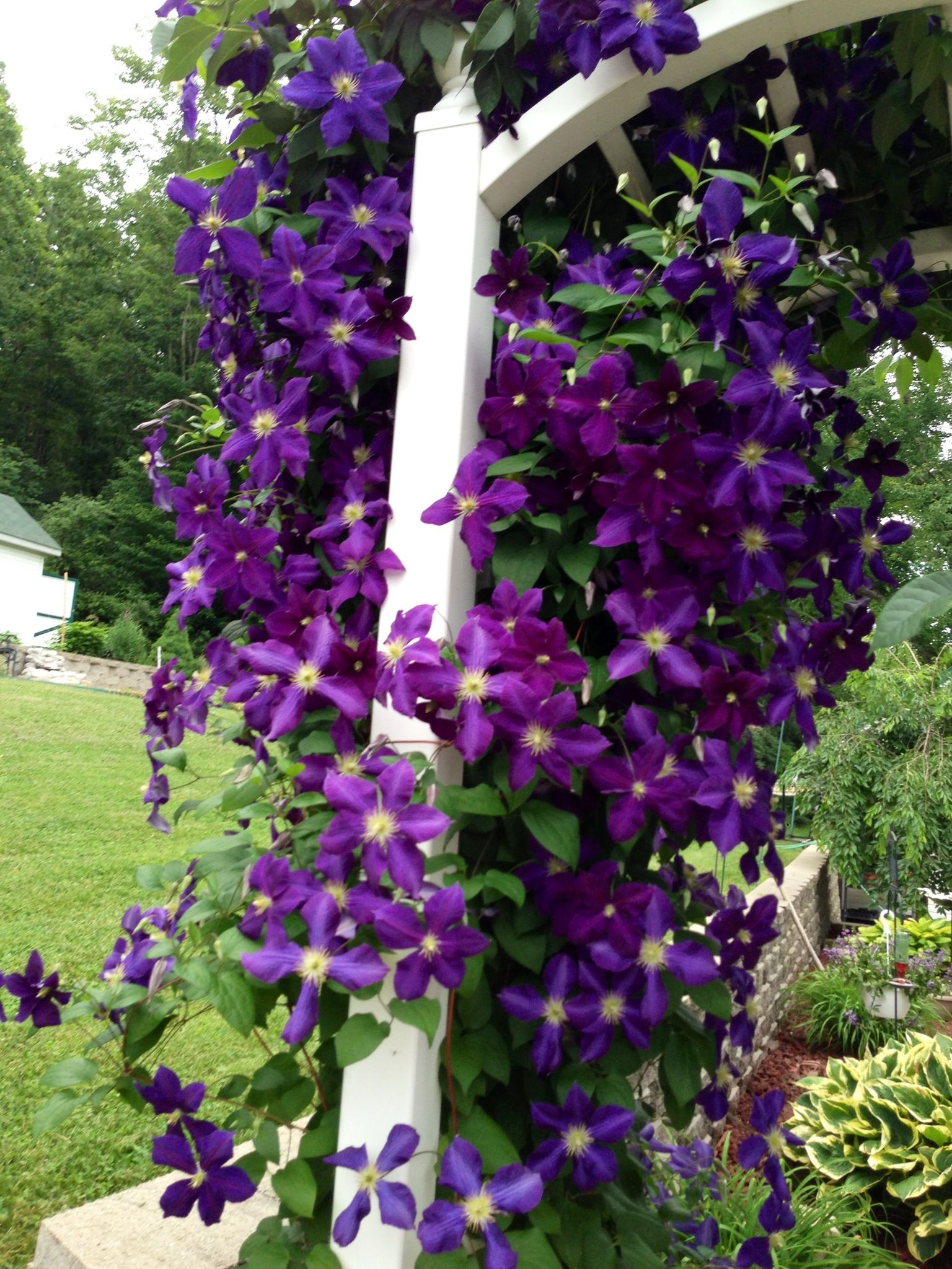 vines on pinterest - photo #1