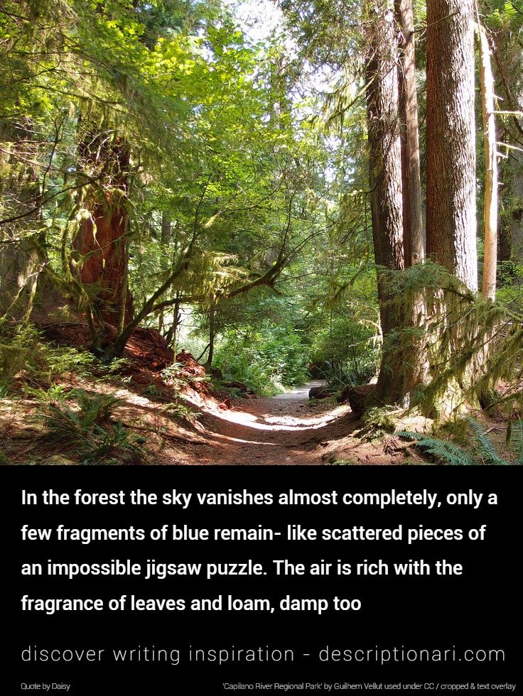 lost in a forest descriptive writing