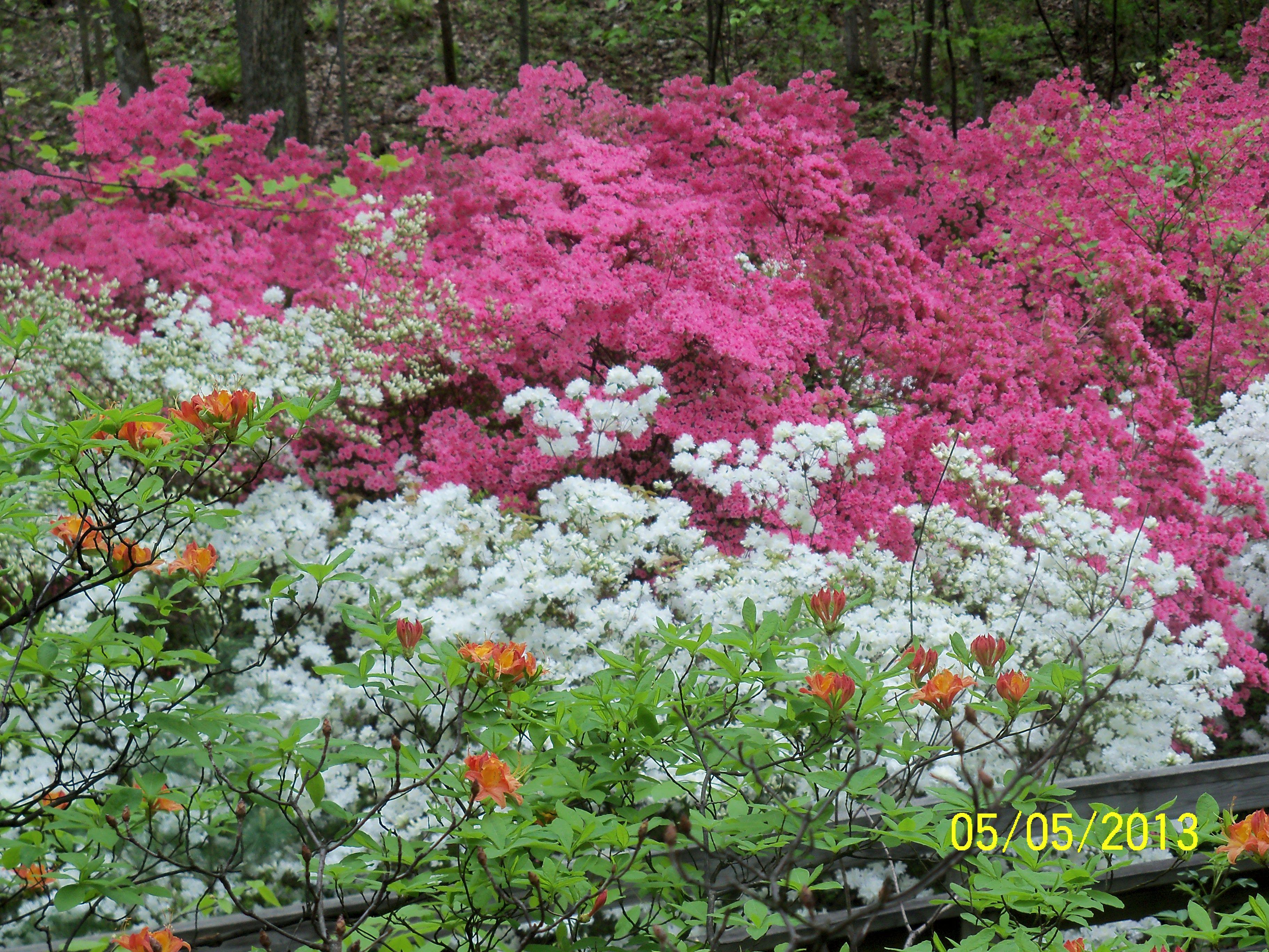 Spring garden ideas on pinterest photograph spring in va for Spring garden ideas