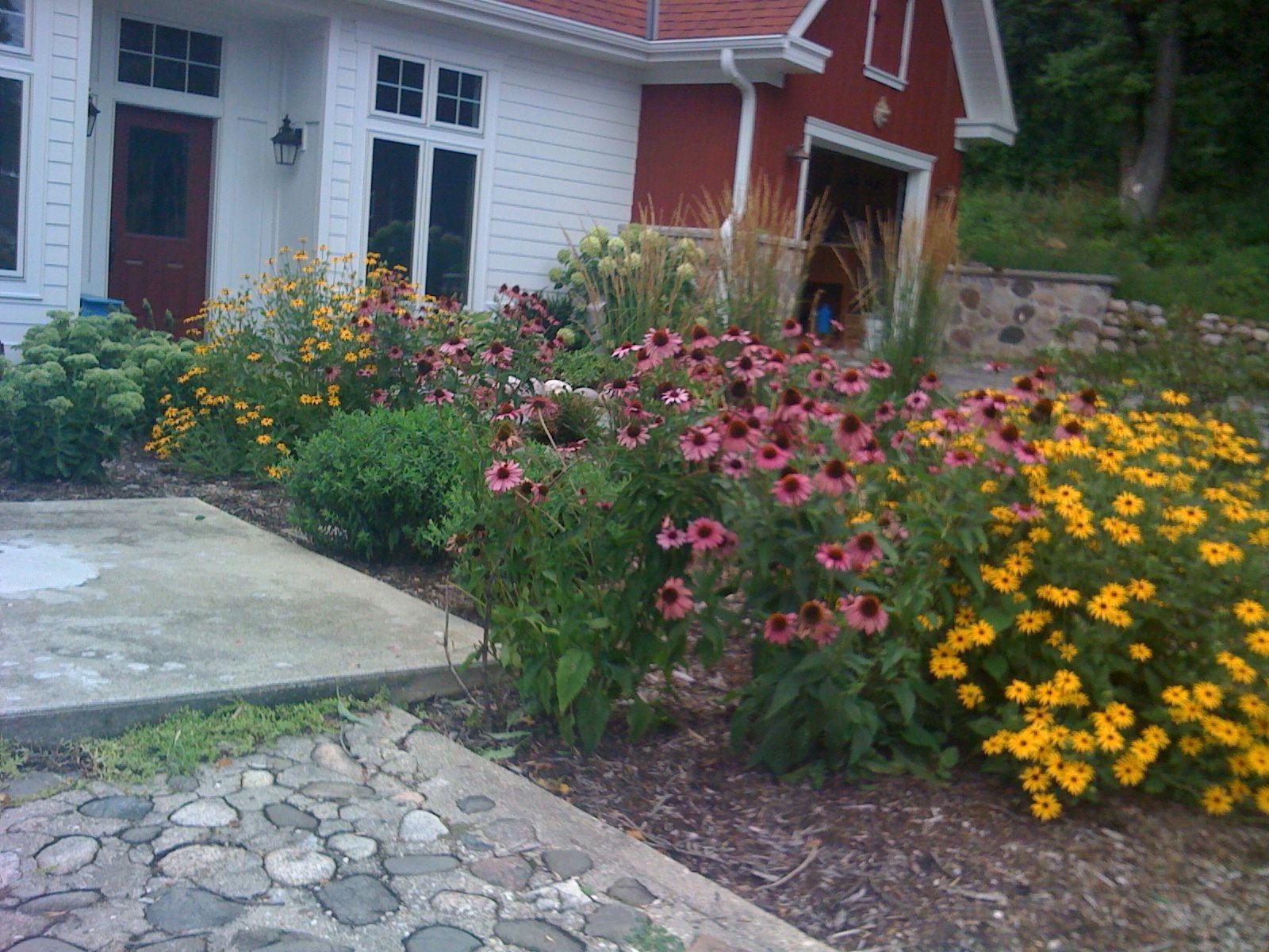 Drought resistant perennials gardens pinterest for Drought resistant gardens