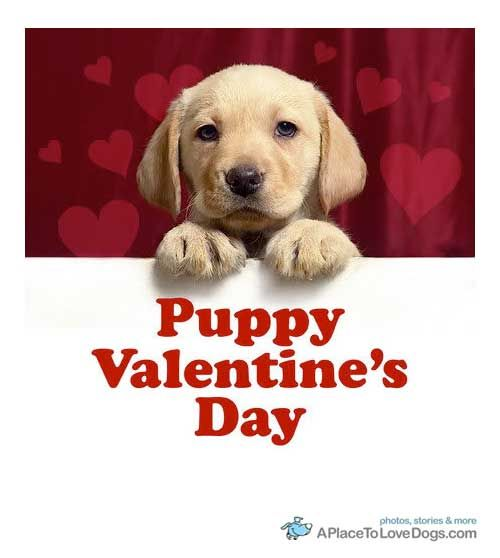 Cute Happy Valentines Day with Dogs   Craft Ideas   Pinterest   Craft